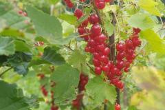 marmeláda-sšhlfrydlant2