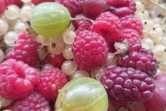 marmeláda-sšhlfrydlant4
